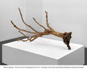 thumb_Fabrice_Samyn_-_From_the_olive_tree_garden_5_2013_-_Courtesy_of_the_artist_and_Gallery_Meessens_Declercq_Brussels